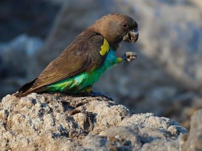 Kafue birds